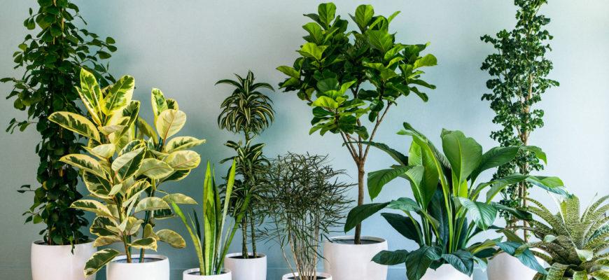 Домашние приметы о растениях